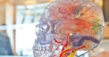 biological-ai-neurons-chips